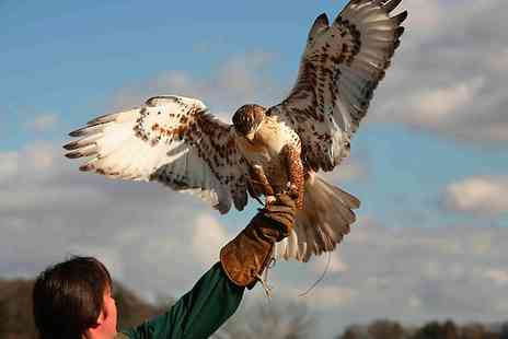 Raptor World - Two Hour Birds of Prey Experience - Save 59%