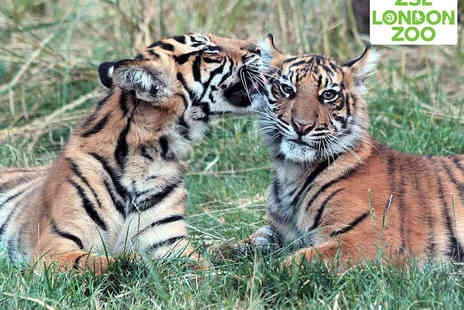 ZSL London Zoo - Child or Adult Ticket to ZSL London Zoos Sunset Safari - Save 23%