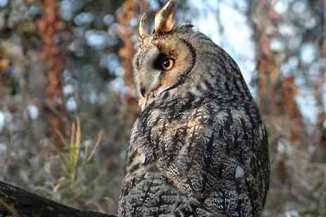 Scottish Owl Centre -  Owl Day Pass For Two  - Save 40%