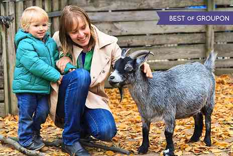 Melsop Farm Park - Melsop Farm Park Day Pass With Bag of Feed  - Save 50%