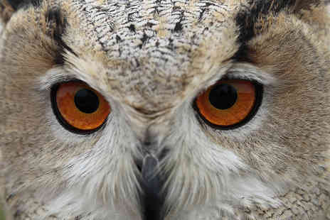 CJ's Birds of Prey - Three Hour Owl, Hawk and Falconry Experience - Save 72%