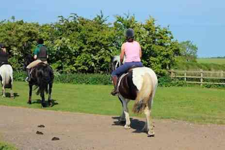 Brimington Equestrian Centre - Five Private Horse Riding Lessons - Save 0%