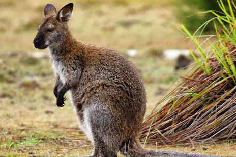 Lakeside Animal Park - Wallaby Experience for Two - Save 75%