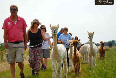 Alpaca Annie - Alpaca Trek for One  - Save 44%