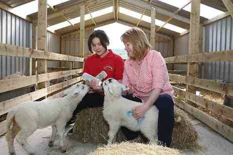 Mrs Dowsons - Family Entry to Mrs Dowsons Farm Plus Tractor Ride - Save 50%