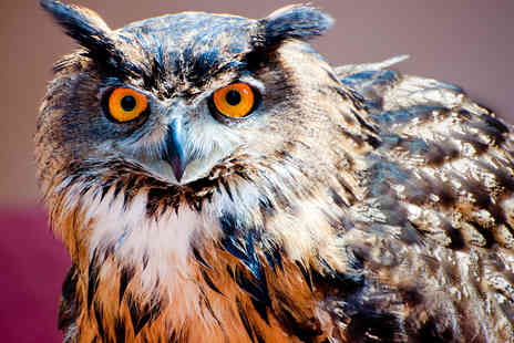 Rutland Falconry and Owl Centre - Two Hour Hawk or Owl Handling and Flying Experience - Save 72%
