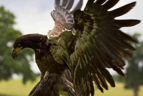 The English School of Falconry - Out of Africa Bird of Prey Experience with a Hot Drink and Slice of Cake - Save 79%