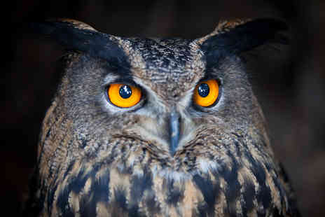 HawksFlight Falconry - Two Hour Owl Handling and Flying Experience - Save 62%
