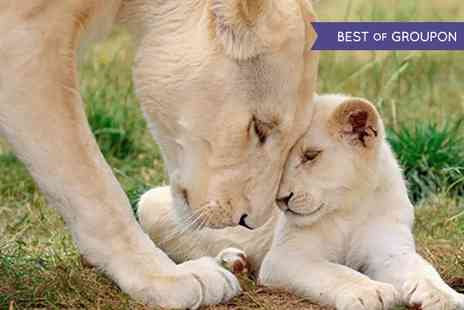 Wildlife Heritage Foundation - Groupon Exclusive White Lion Champagne Afternoon Tea and Tour - Save 0%