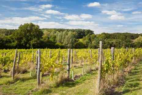 Sedlescombe Organic Vineyard -  Award Winning Vineyard Tour, Tasting & More for Two - Save 41%
