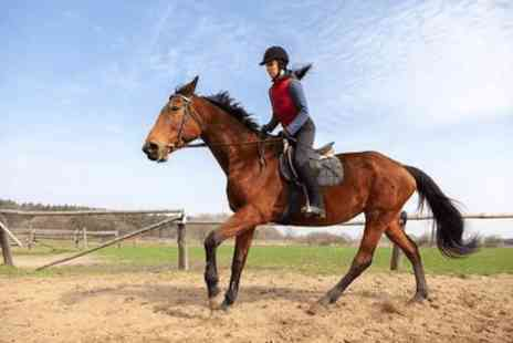 Fordbank Livery and Equi Centre - One hour horse riding lesson - Save 0%