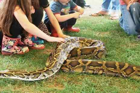 Snakes Alive - One Hour Reptile Experience and Access to Reptile House  - Save 44%