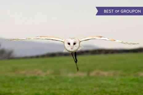 The Coniston Hotel - Owl Encounter or Half Day Falconry Experience - Save 43%