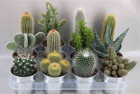 Merchtopia - Cactus with a mini zinc plant pot - Save 46%