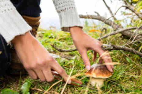 Sunrise Bushcraft  - Feast and Forage Taste the Seasons Bush Craft Course with Food - Save 63%