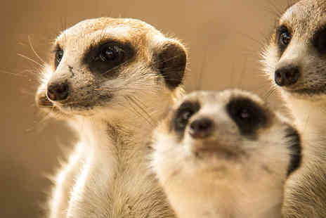 Spitfire alternative solutions activities - Meet the Meerkats Experience  -  Save 0%