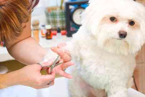 Oplex Careers - Dog Grooming Course with CPD Certificate - Save 92%