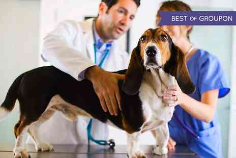 Champion Vet - Veterinary Services For Dogs and Cats  - Save 0%