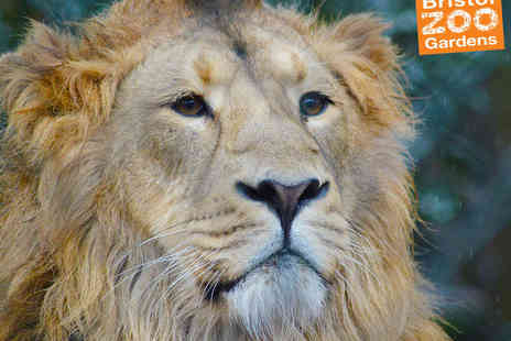 Bristol Zoo - One Ticket to Bristol Zoo  - Save 50%