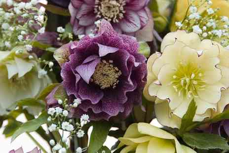 Hayloft Plants - 10 Hellebore Hybrid Plants With Free Delivery - Save 0%