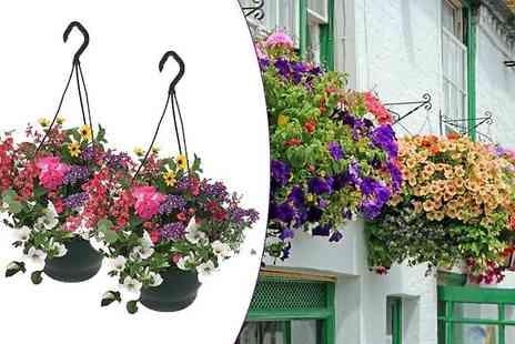 Garden wants - Two Mixed Floral Hanging Baskets - Save 30%