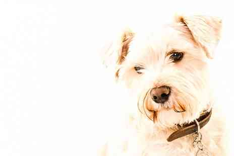 One Photography - Pet Photoshoot and Canvas with up to Five Animals and Owners - Save 89%