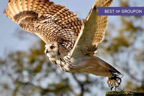 Millets Farm Falconry - Birds of Prey Photography Day  - Save 55%