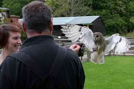 Hawksflight Falconry - Three Hour Birds of Prey Experience for One - Save 74%