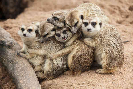 Willow Tree Family Farm - One hour meet the meerkats experience and farm entry for one   - Save 53%