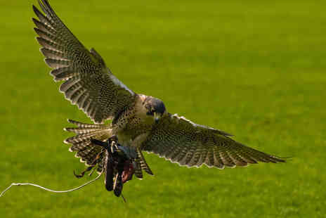 eXcel Falconry - Two Hour Bird of Prey Experience with Souvenir Photo and Hot Drink for One  - Save 0%