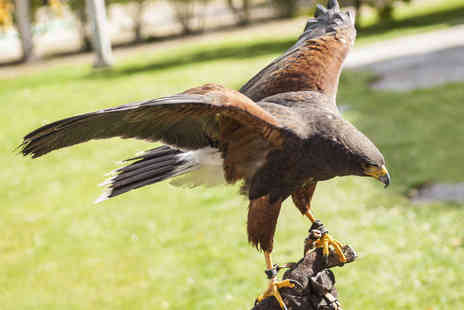 S&D Falconry - Half-Day Falconry Experience for One (£19) or Two (£34) People - Save 73%