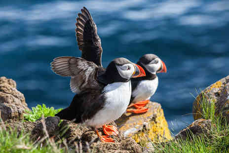 Seawake Boat Tours -   1½ hour powerboat tour of Puffin Island   - Save 40%
