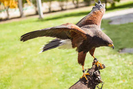 Simon Tebbutt Falconry - Two Hour Falconry Experience with Hawks, Owls and Falcons - Save 72%