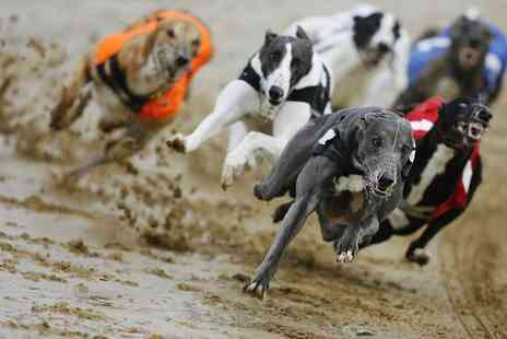 Love The Dogs - Greyhound Racing For Two With Burger, Drink, Race Card and Return Admission Each  - Save 82%