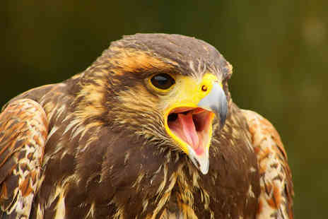 North Somerset Bird of Prey Centre - Bird of Prey Experience with a Cream Tea - Save 58%