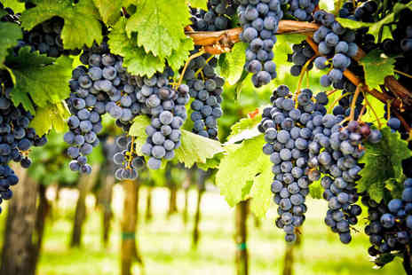 Sedlescombe Organic Vineyard - Autumn Glory Vineyard Experience with Lunch for Two  - Save 41%