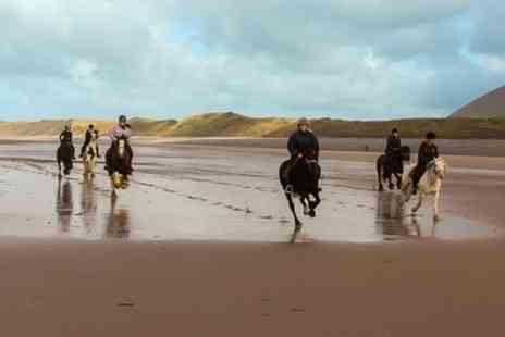 Murthwaite Green Trekking Centre - One Hour Horse Riding Beach Trek for One - Save 42%
