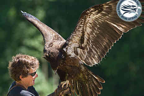 The International Centre for Birds of Prey - Entry for One Adult with Hot Drink or One Child with Juice Drink - Save 47%