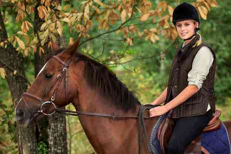 Old Town Riding School - One Hour horse riding Lessons for One  - Save 51%