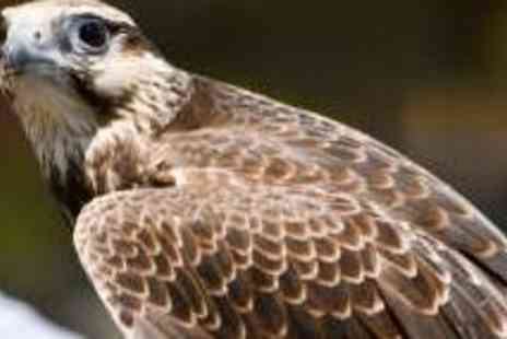 Cheshire Falconry - One and half Hour Bird of Prey Handling Experience - Save 51%