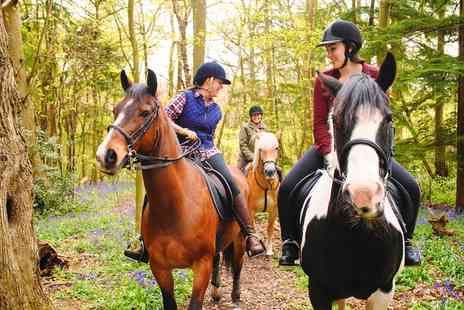 Four Winds Equestrian Centre - One Hour Horse Riding Lesson for One Child or Adult - Save 50%