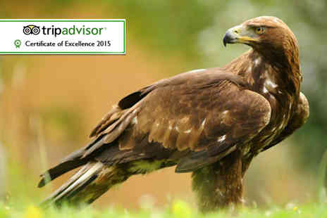 Falconry Experiences - Three hour falconry and owl handling experience for one  - Save 62%