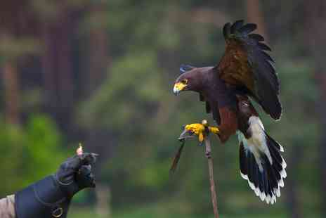 Icarus Falconry - Two Hour Experience With Guided Tour - Save 65%