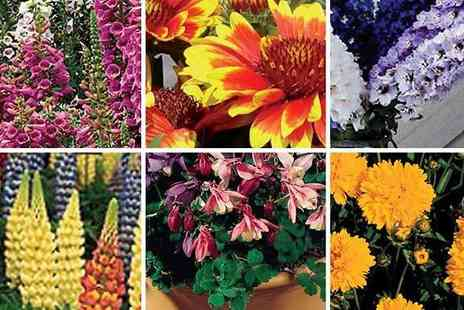 Garden wants - Perennial Mixed Flower Collection - Save 53%