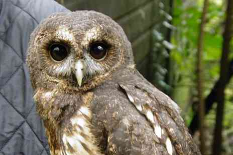 Rutland Falconry and Owl Centre - Two Hour Woodland Experience with Flight Demo - Save 72%