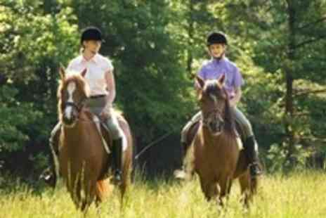 Edinburgh and Lasswade Riding Centre - Beginner Horse Riding Session - Save 62%