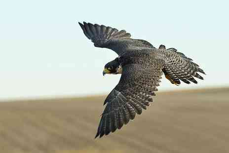 Hawking About - One hour hawk walk for one   - Save 58%