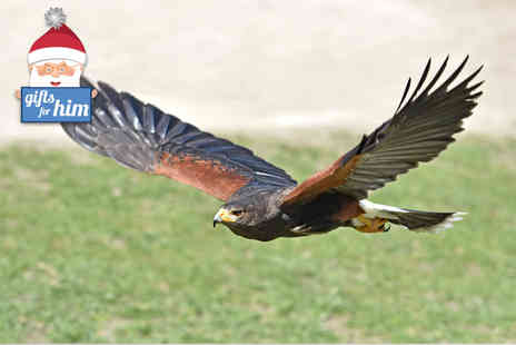 World of Wings - Two hour falconry experience for one  - Save 58%
