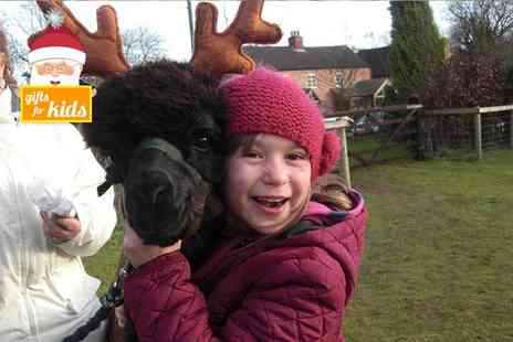 Charnwood Forest Alpacas - Christmas alpaca experience for one   Save 50%