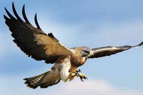 Rutland Falconry and Owl Centre - Two Hour Hands on Birds of Prey Experience - Save 77%
